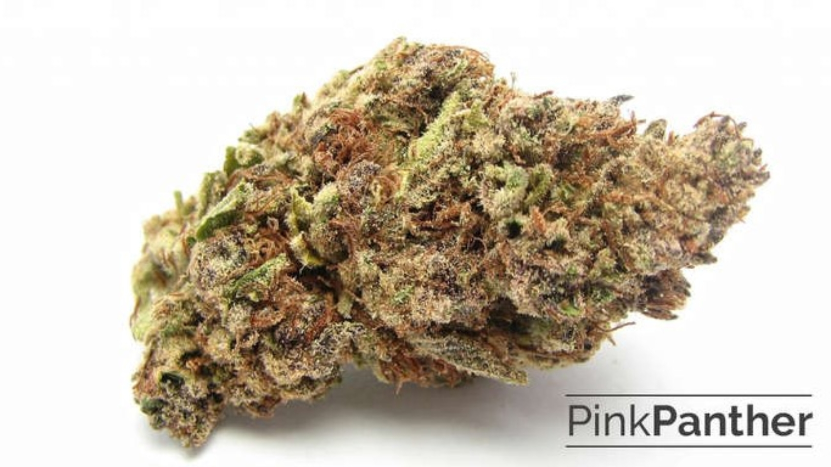 Pink Panther Strain