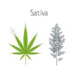 sativa-benefits-05