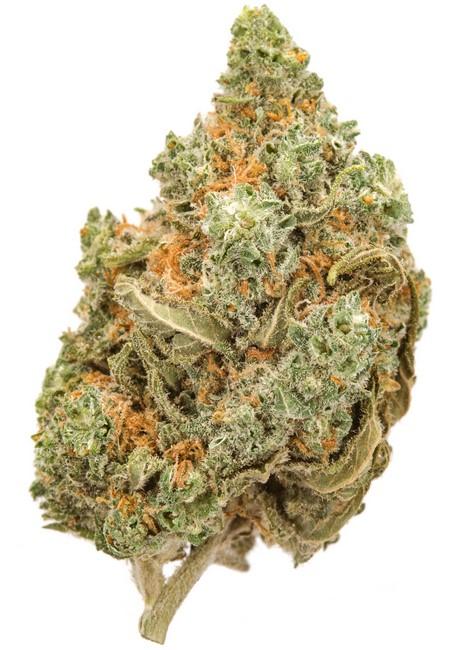 amnesia weed effet