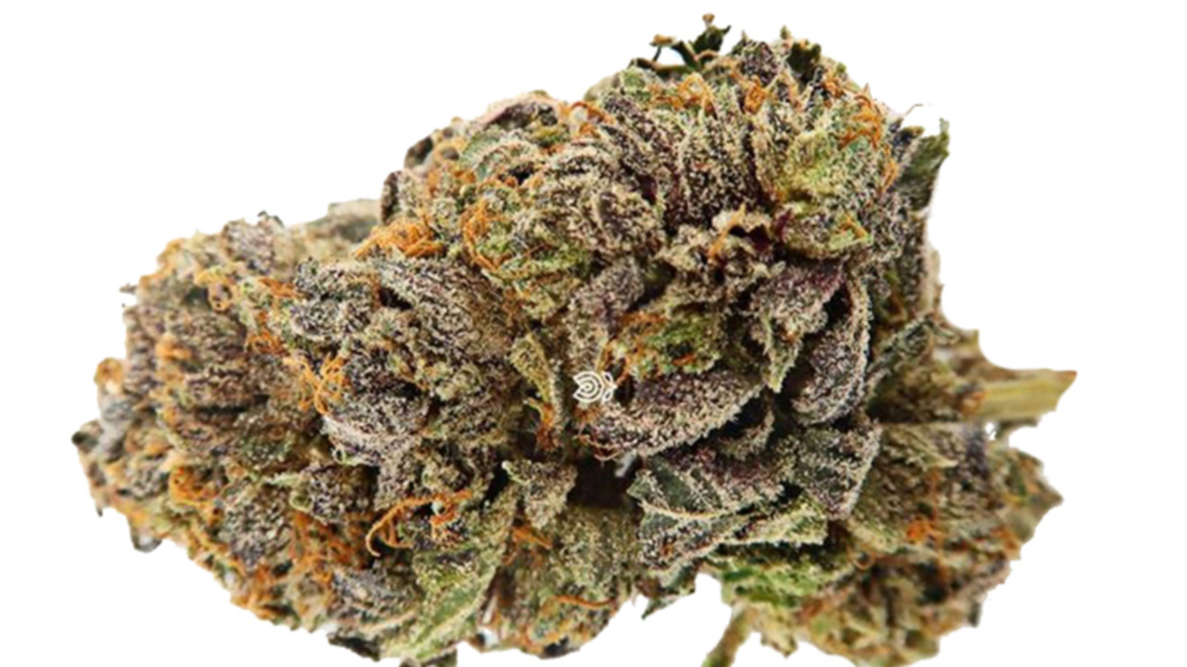 Dr-Who-Strain-weed-3