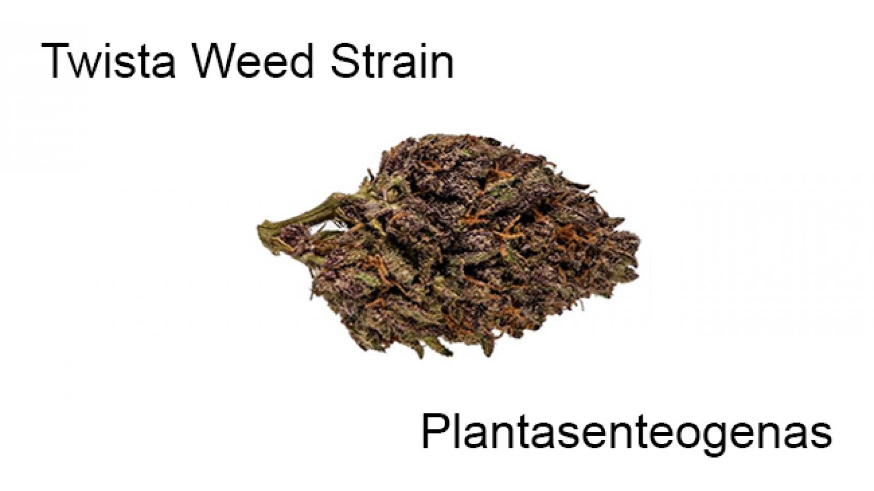 Twista Weed Strain