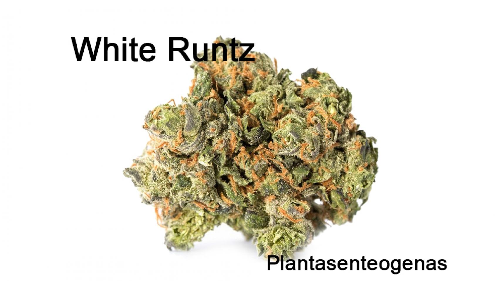 white-runtz-3