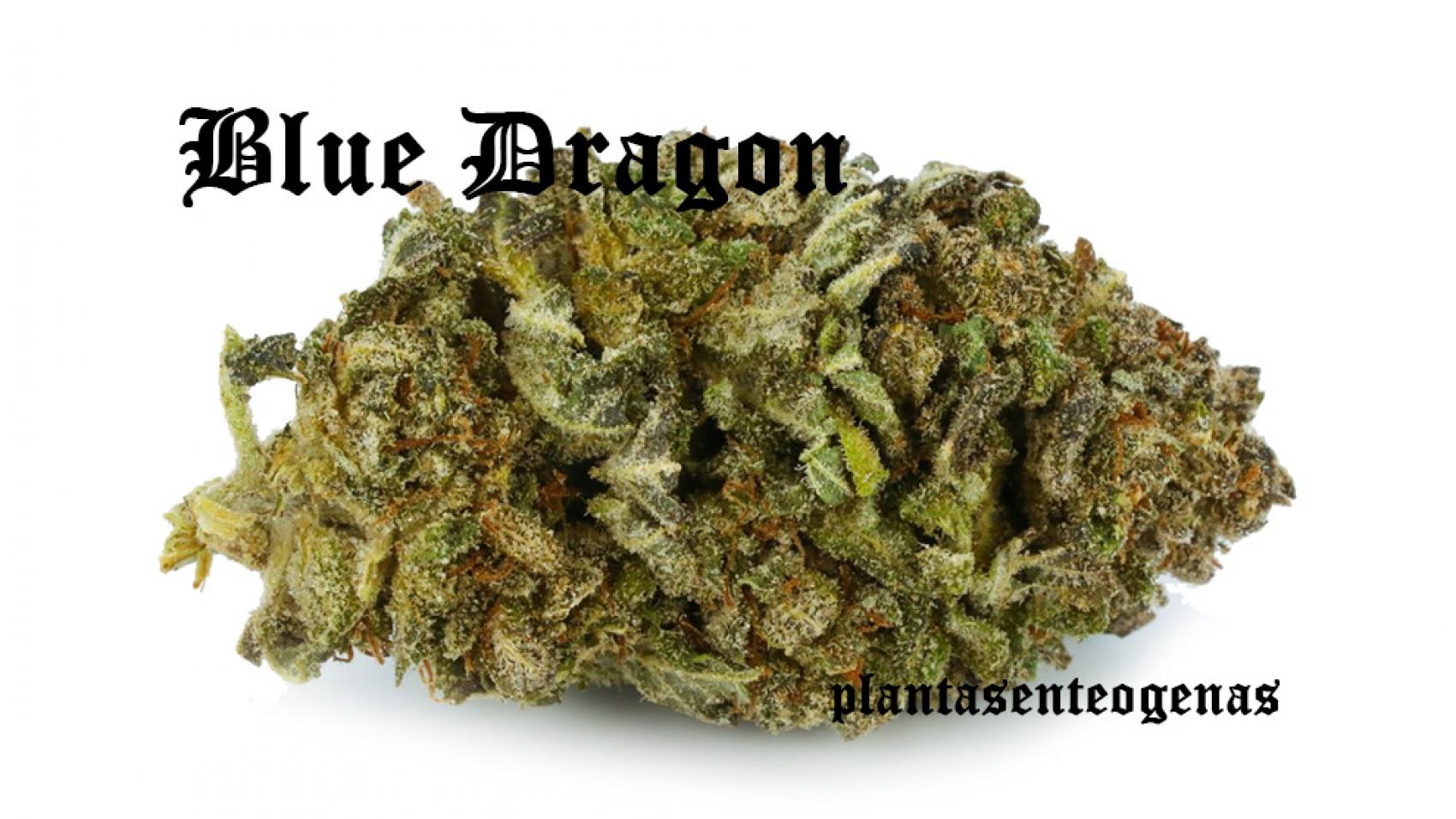 Blue-Dragon-002