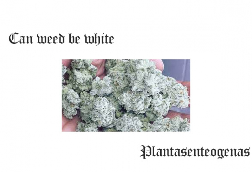 Can weed be white