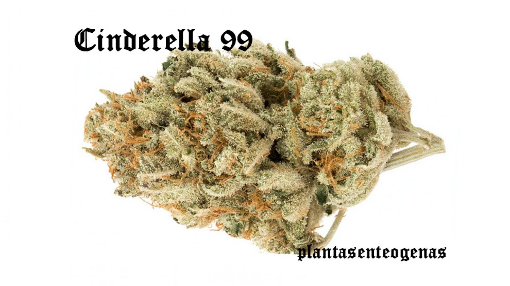 Cinderella-99-003