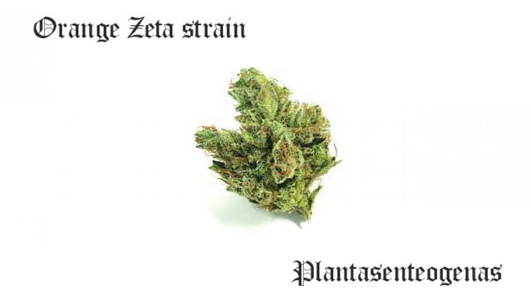 Orange Zeta strain