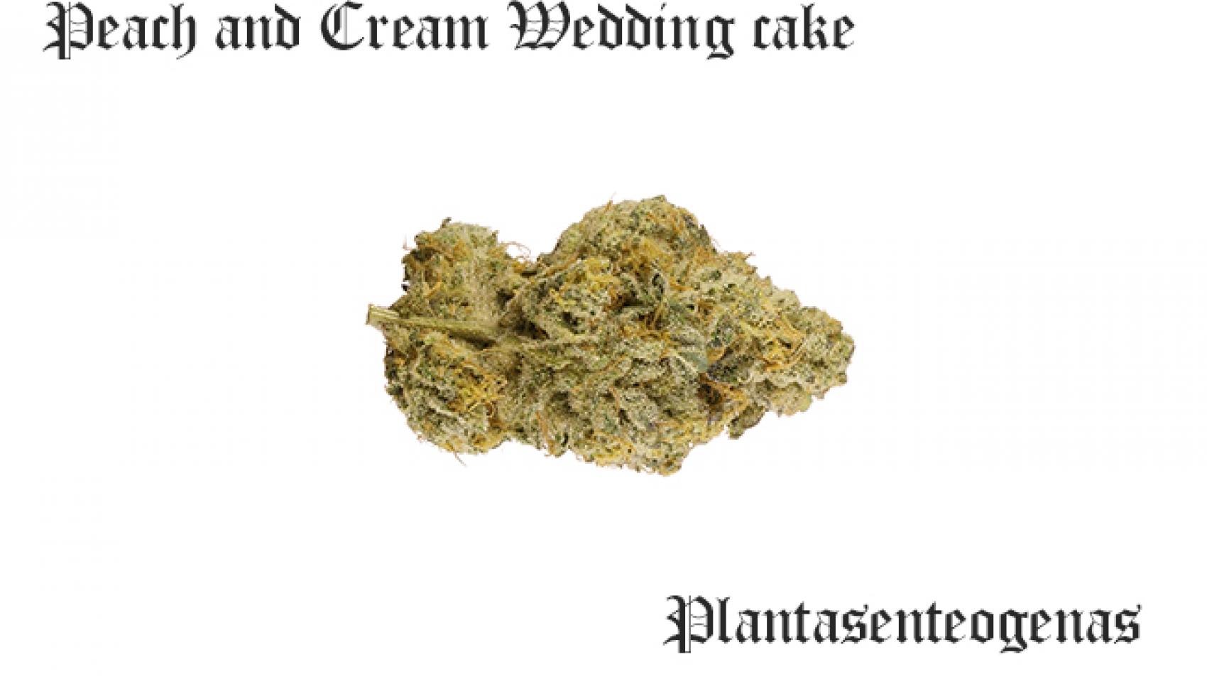 Peach and Cream Wedding cake