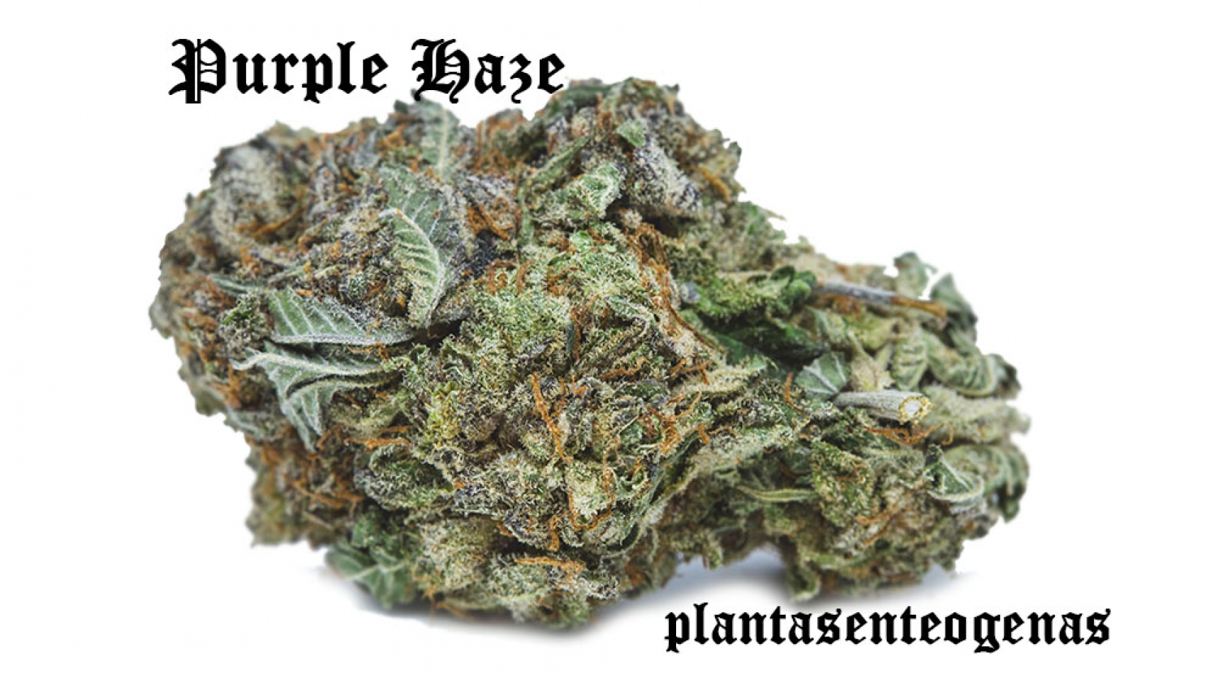 Purple-Haze-02