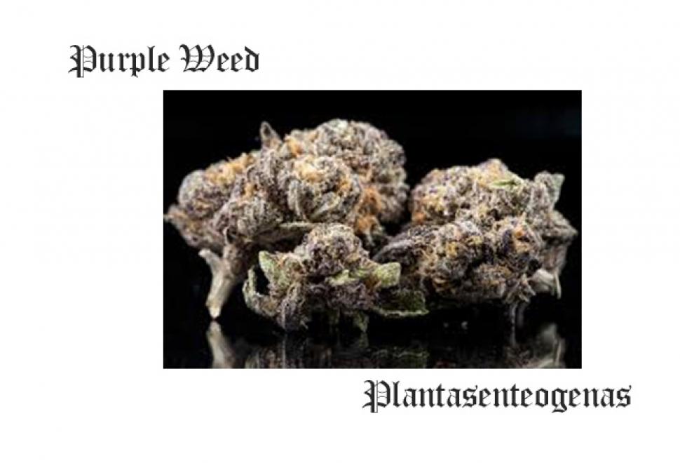 Purple Weed