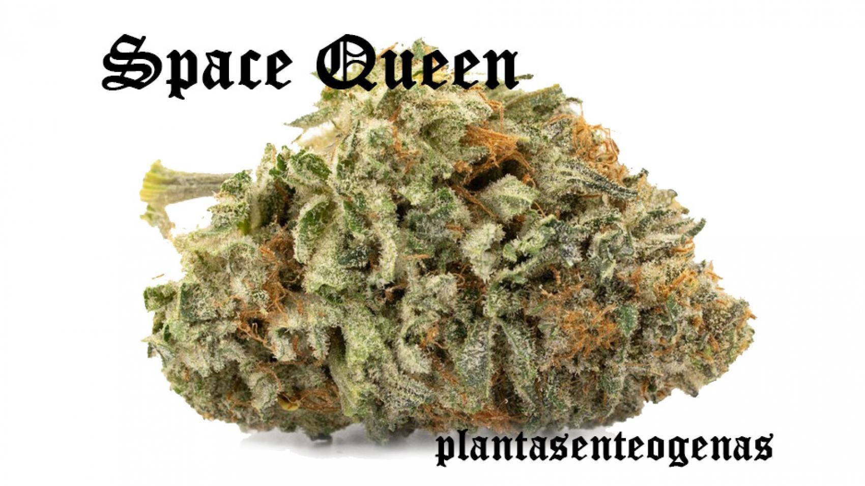 Space-Queen-02