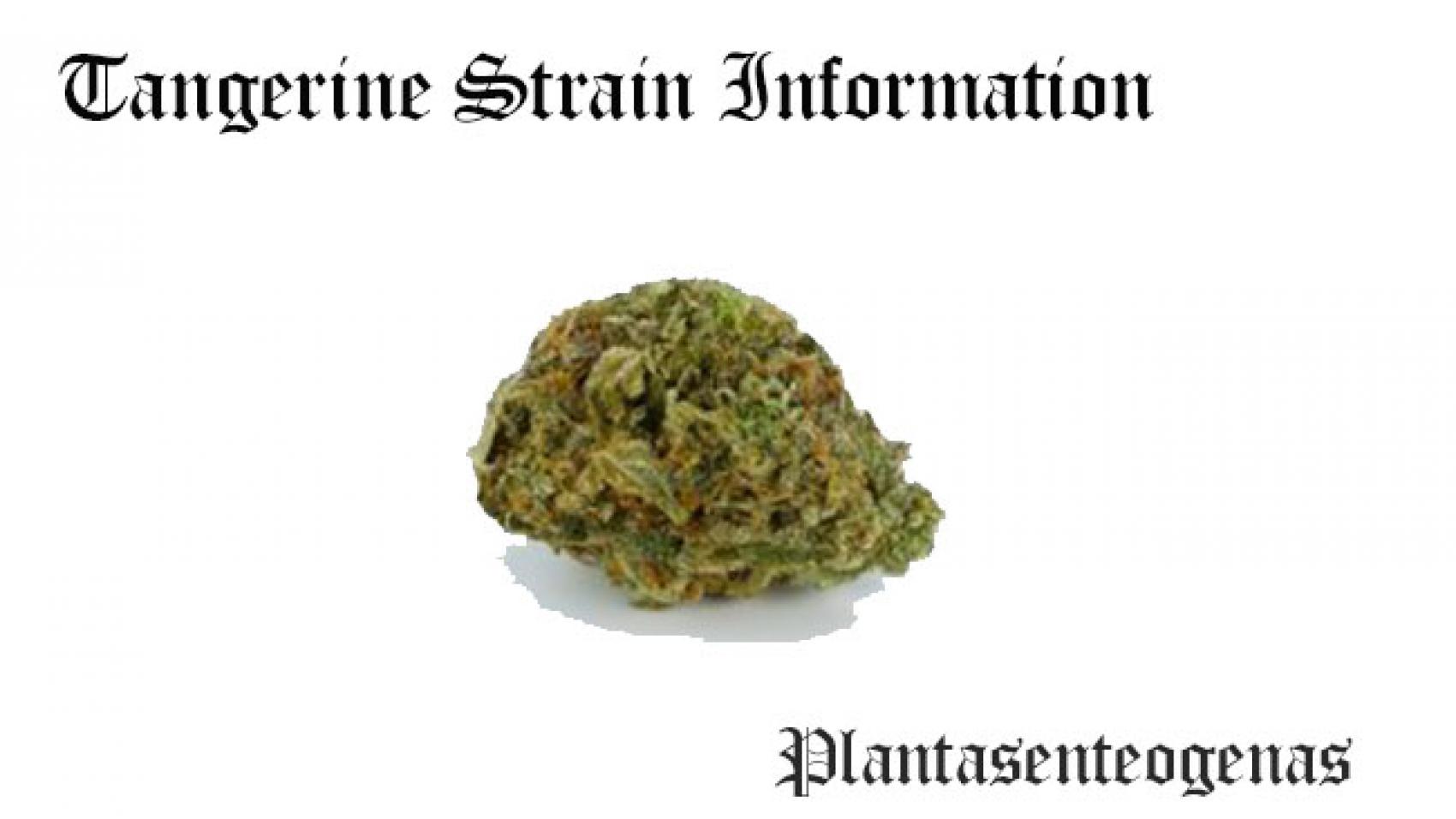Tangerine Strain Information