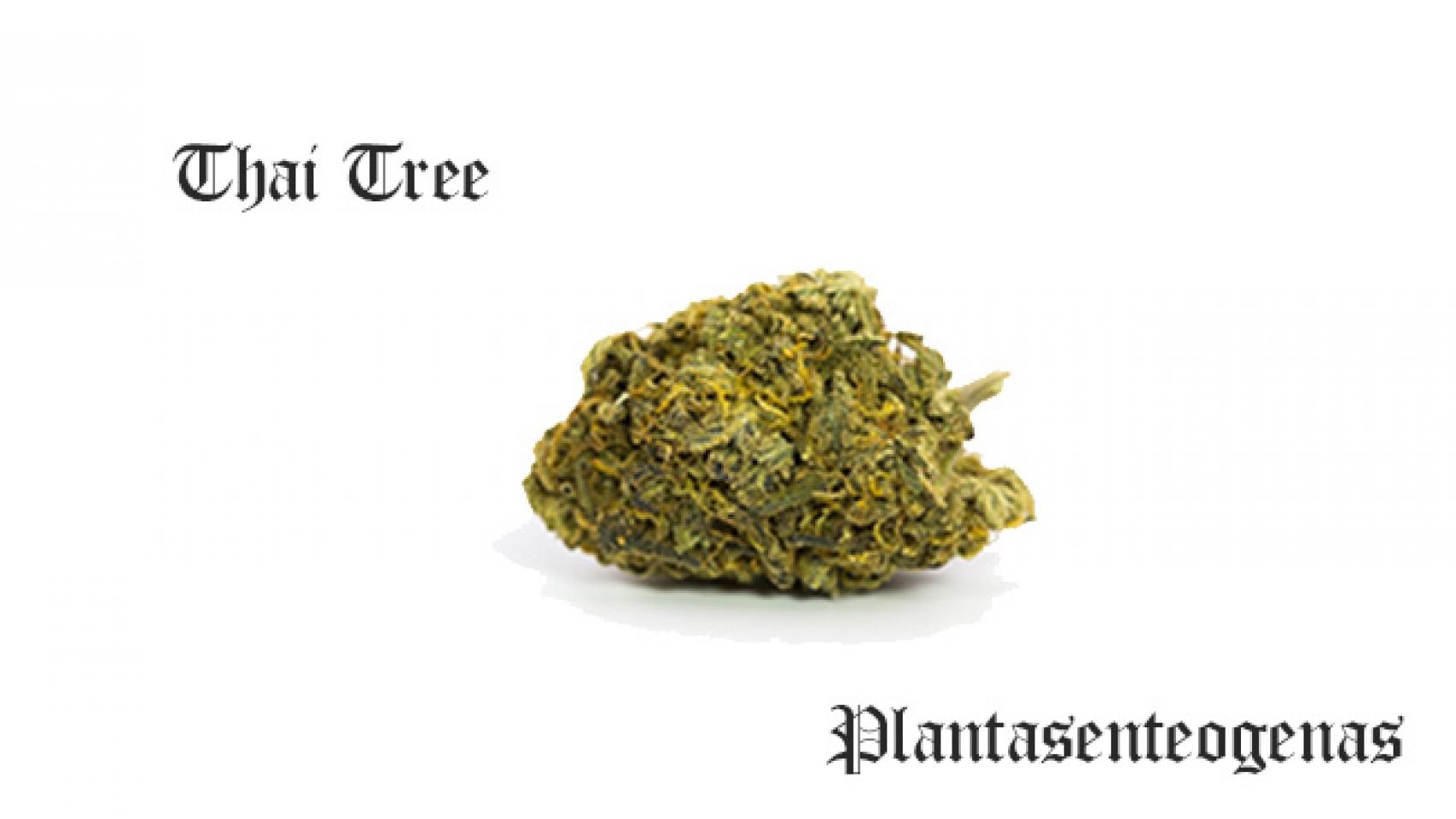 Thai Tree