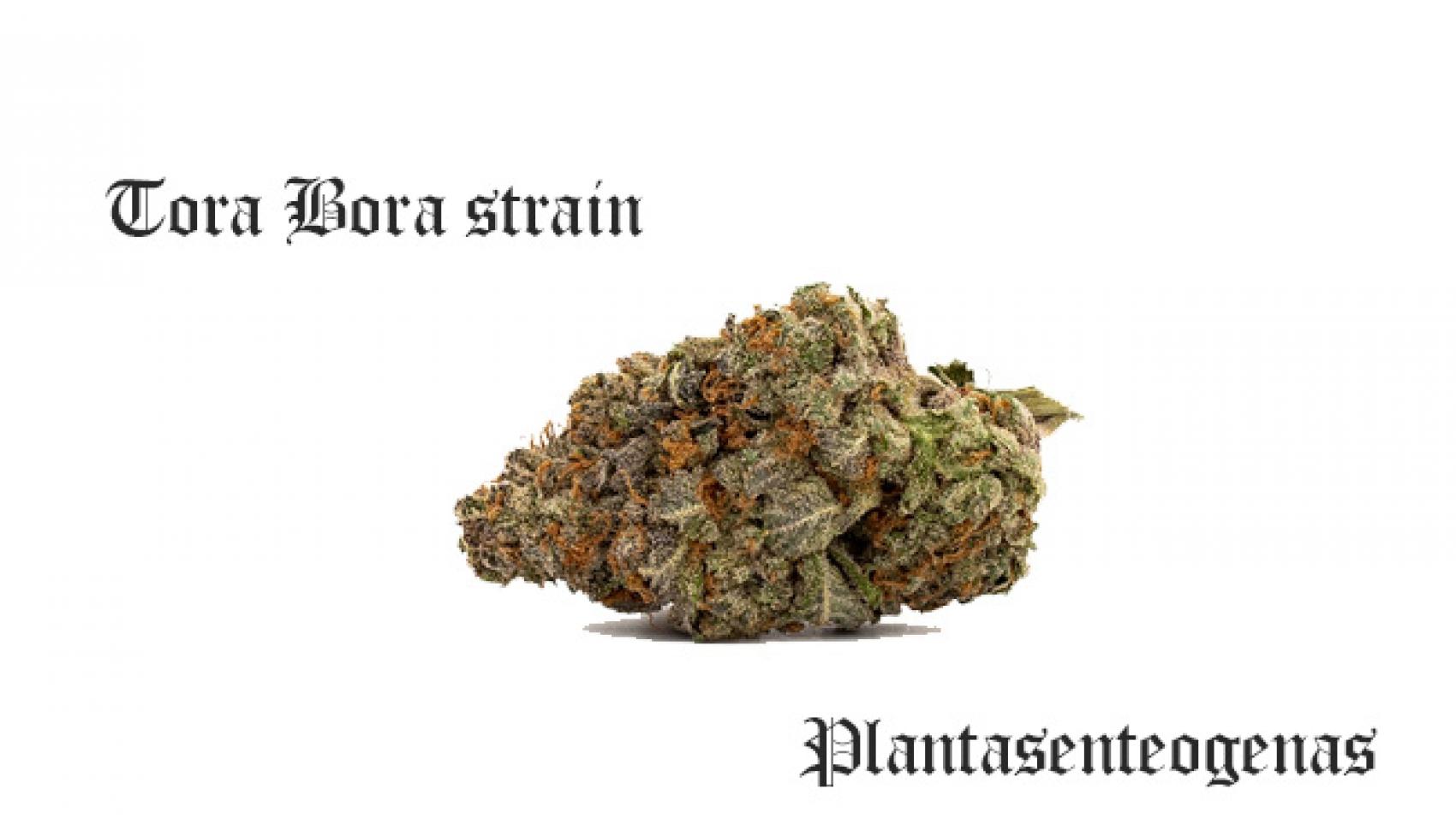 Tora Bora strain