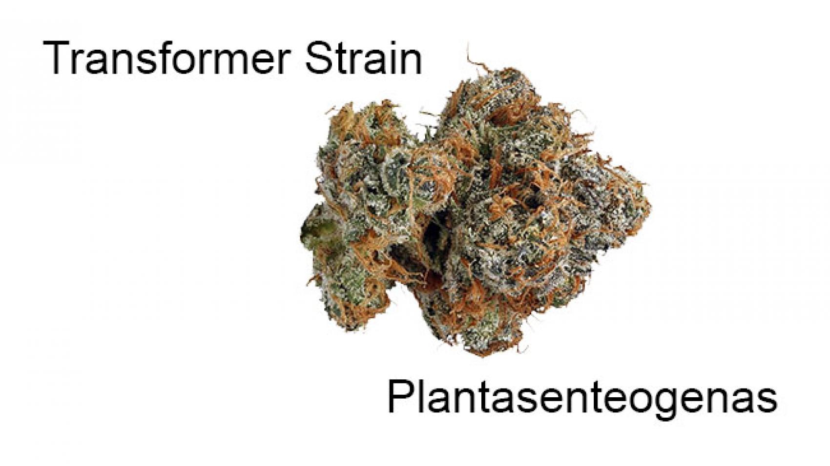 Transformer Strain