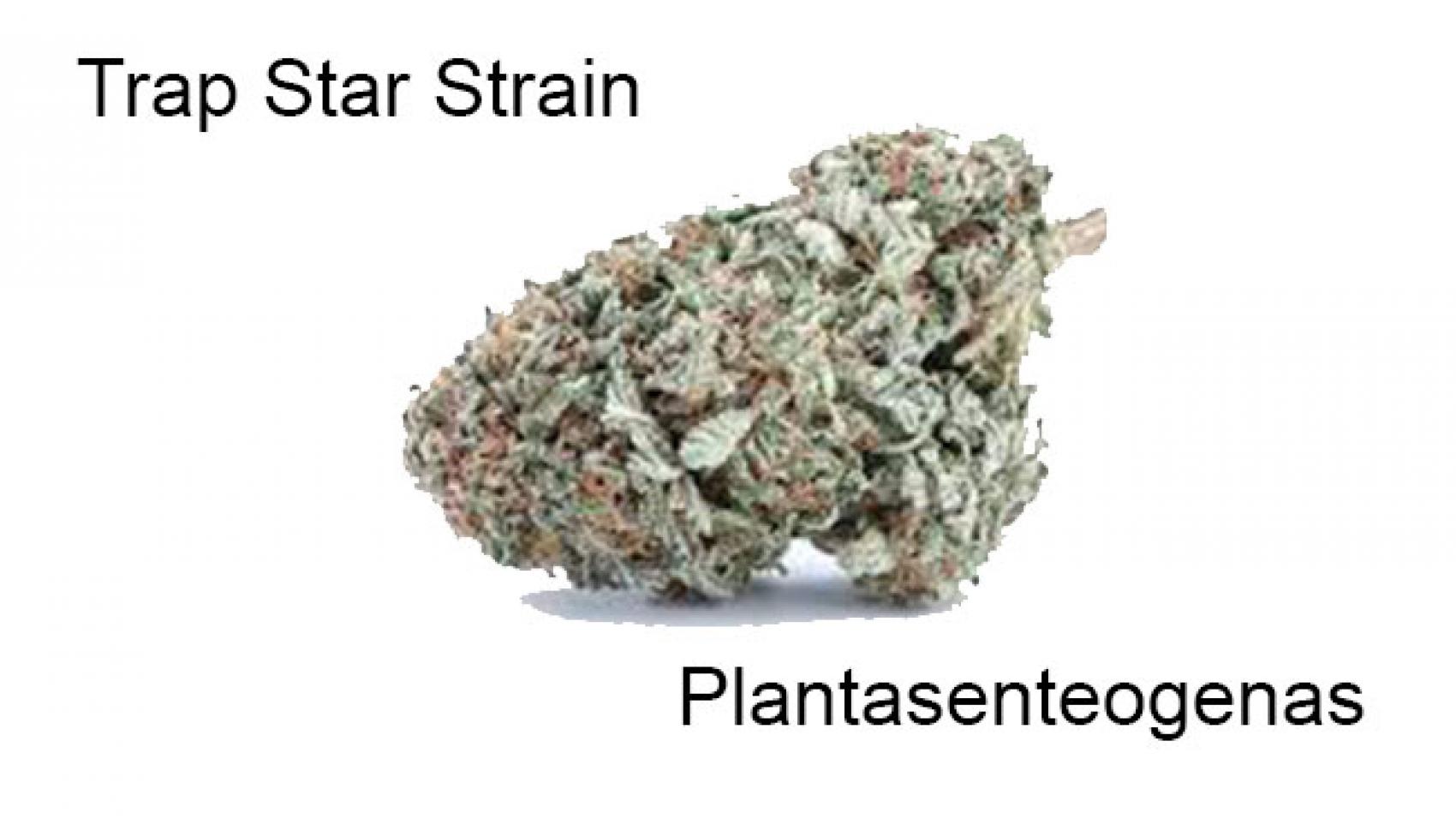 Trap Star Strain