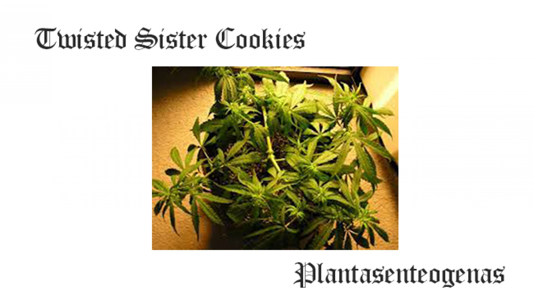 Twisted Sister Cookies