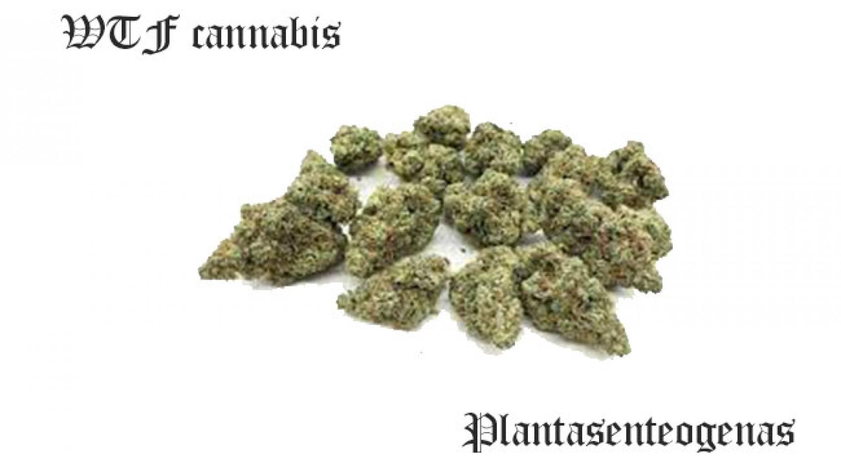 WTF cannabis