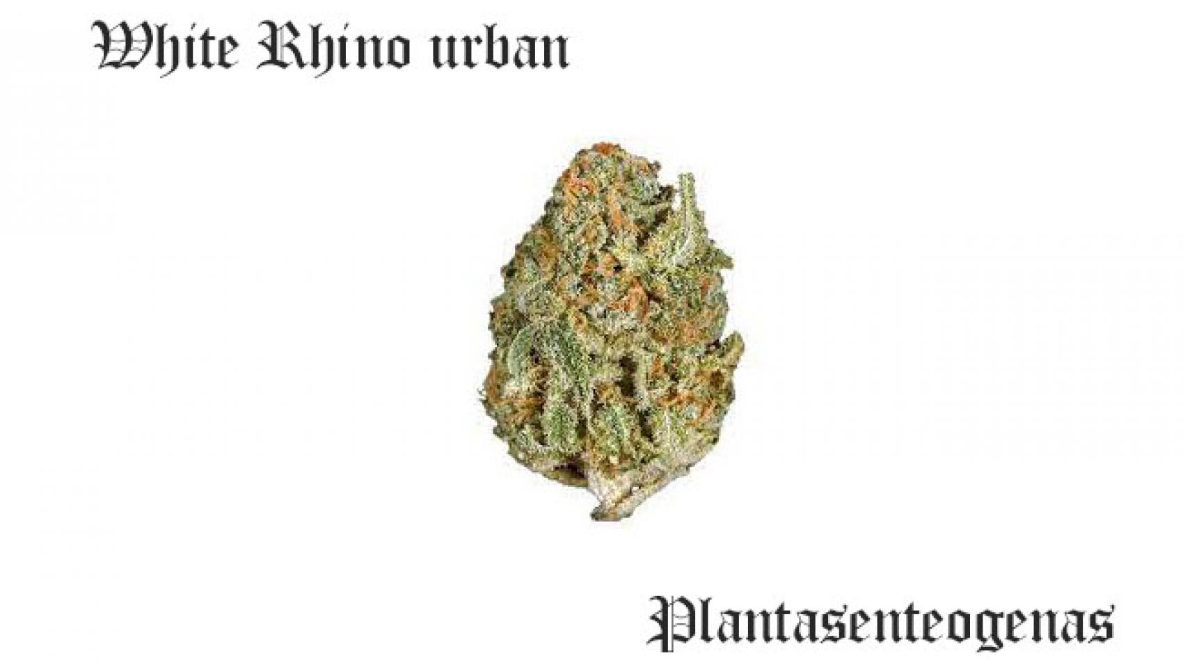 White Rhino urban
