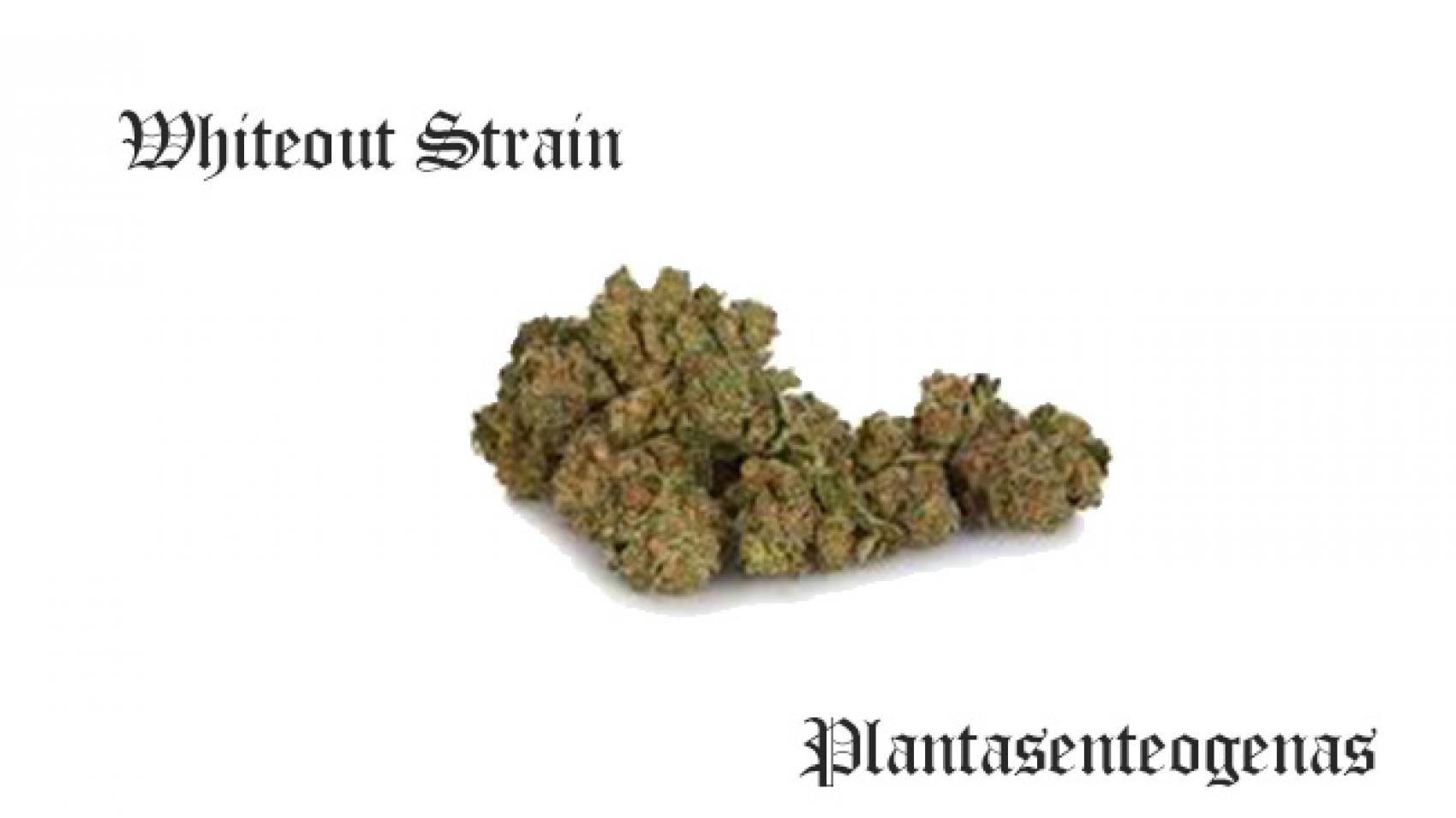Whiteout Strain