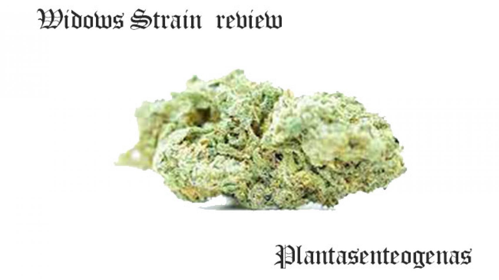 Widows Strain review