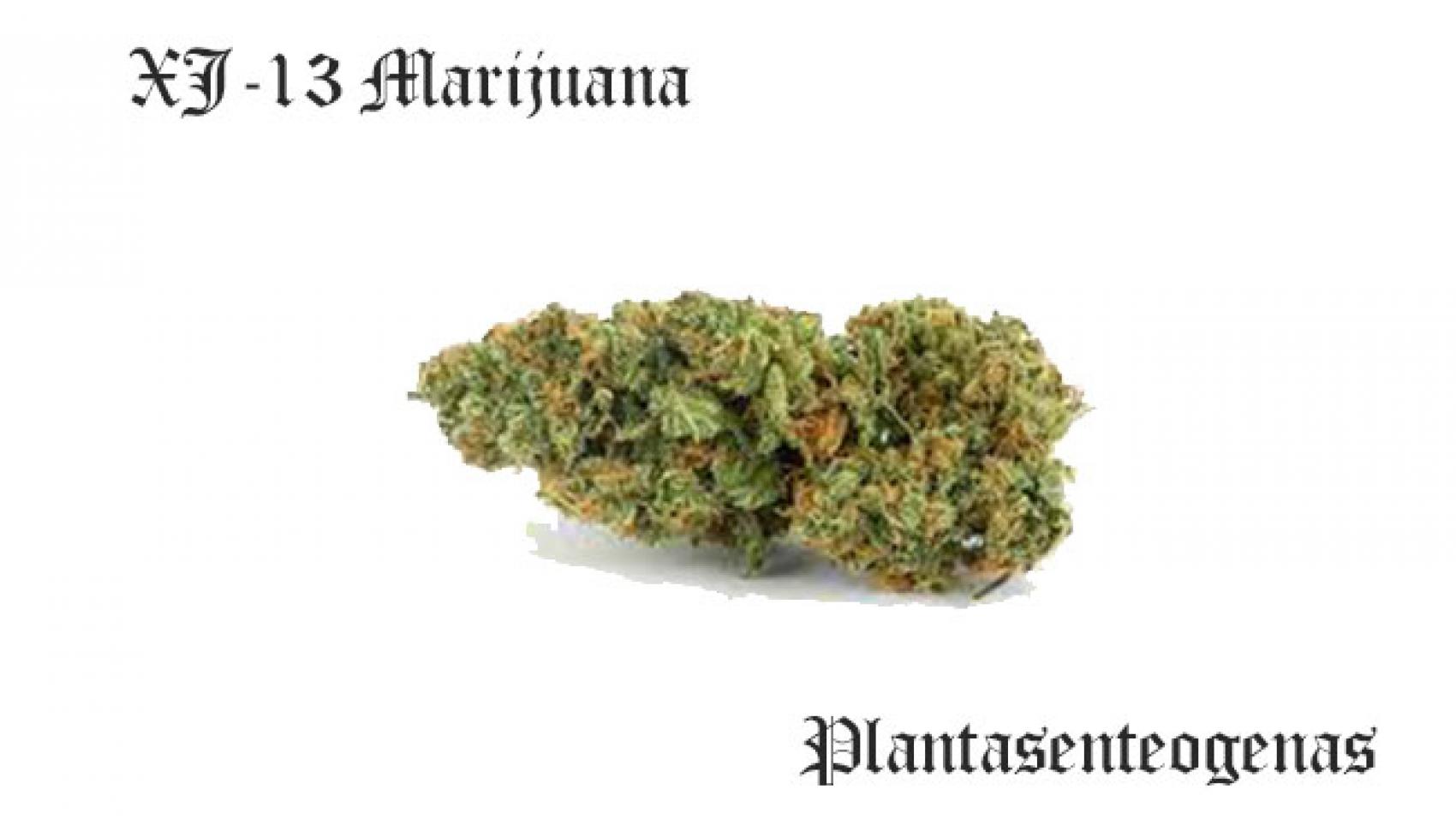 XJ-13 Marijuana