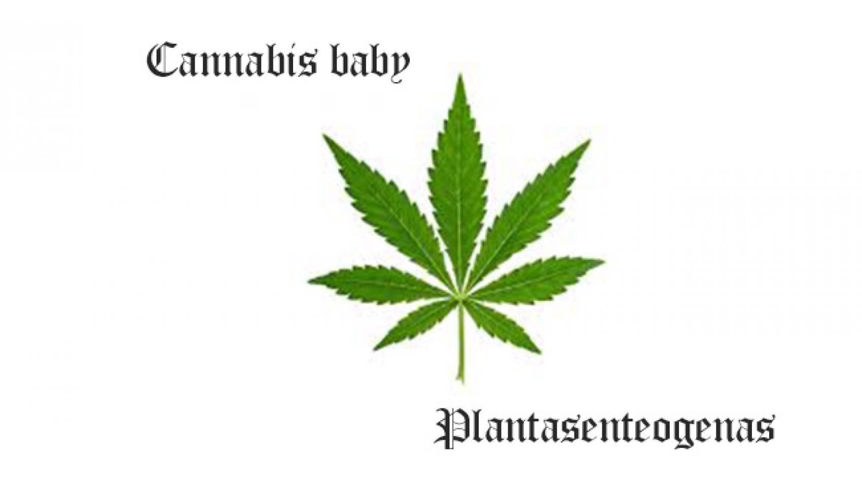 cannabis baby