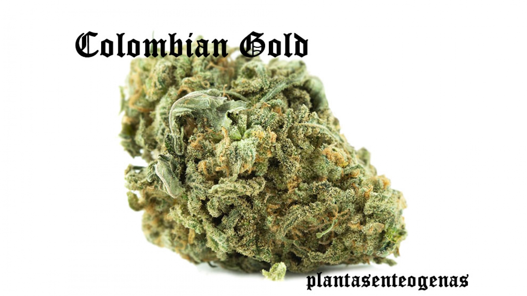 colombian-gold-05