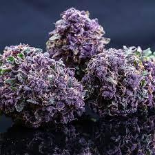purple rhino strain