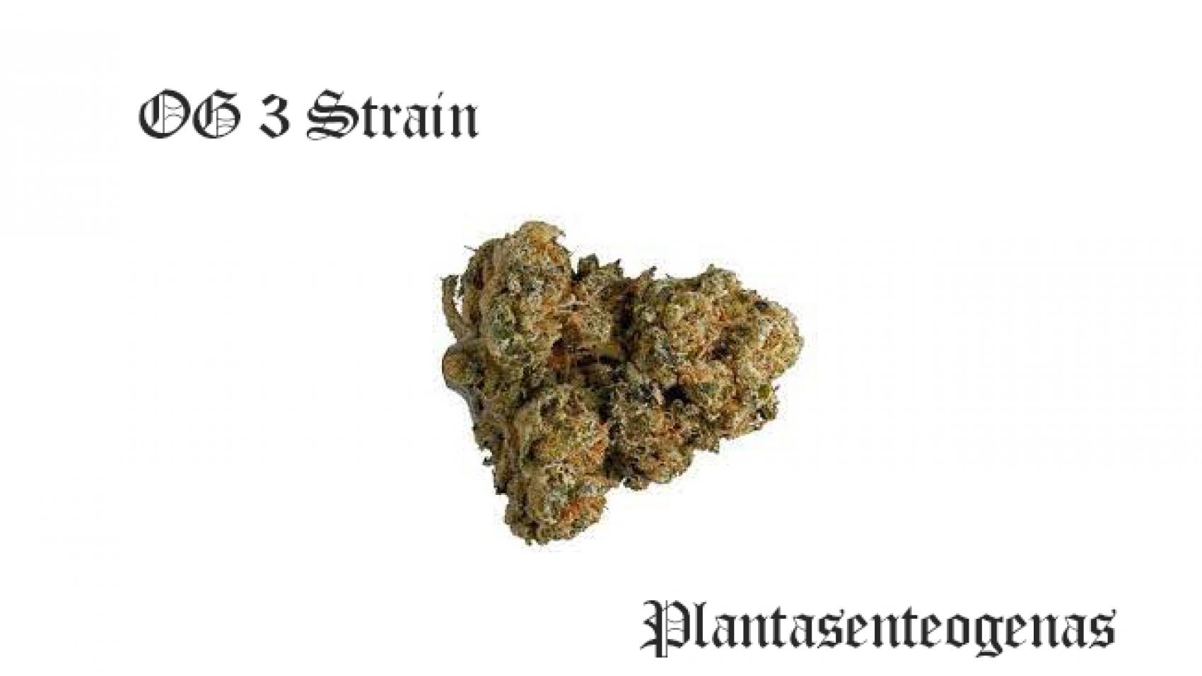 og 3 strain