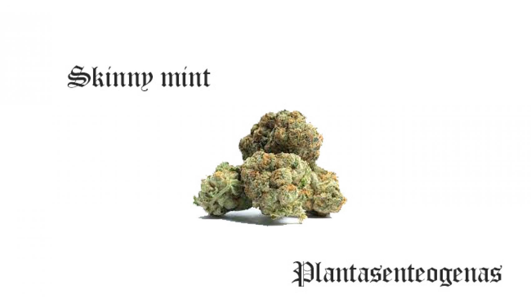 skinny mint