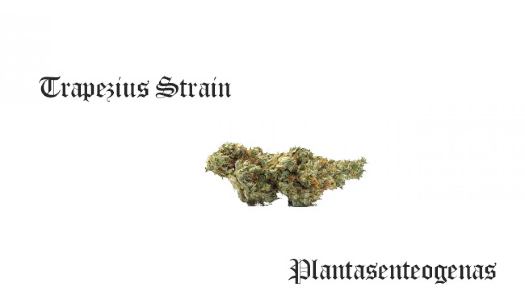 trapezius strain