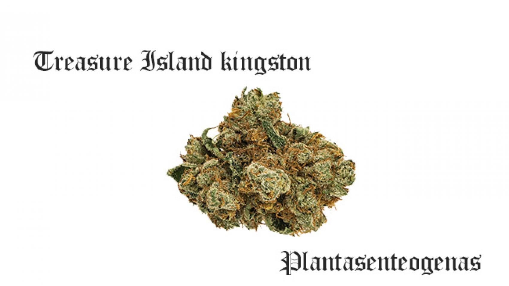 treasure island kingston