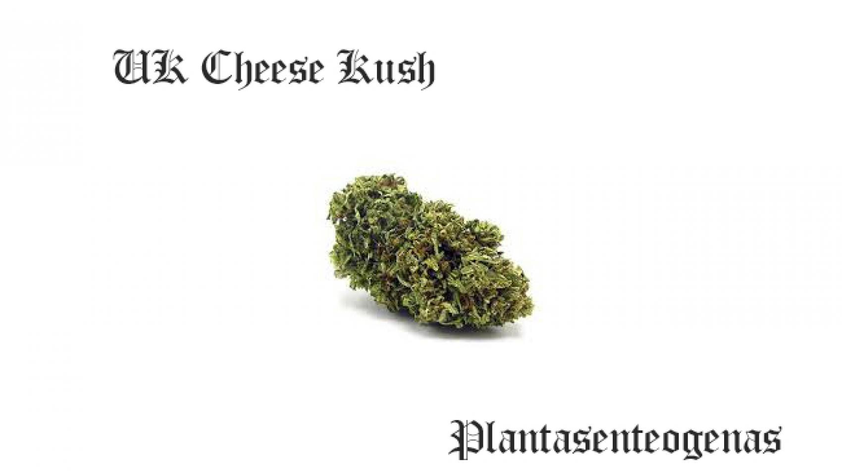 uk cheese kush