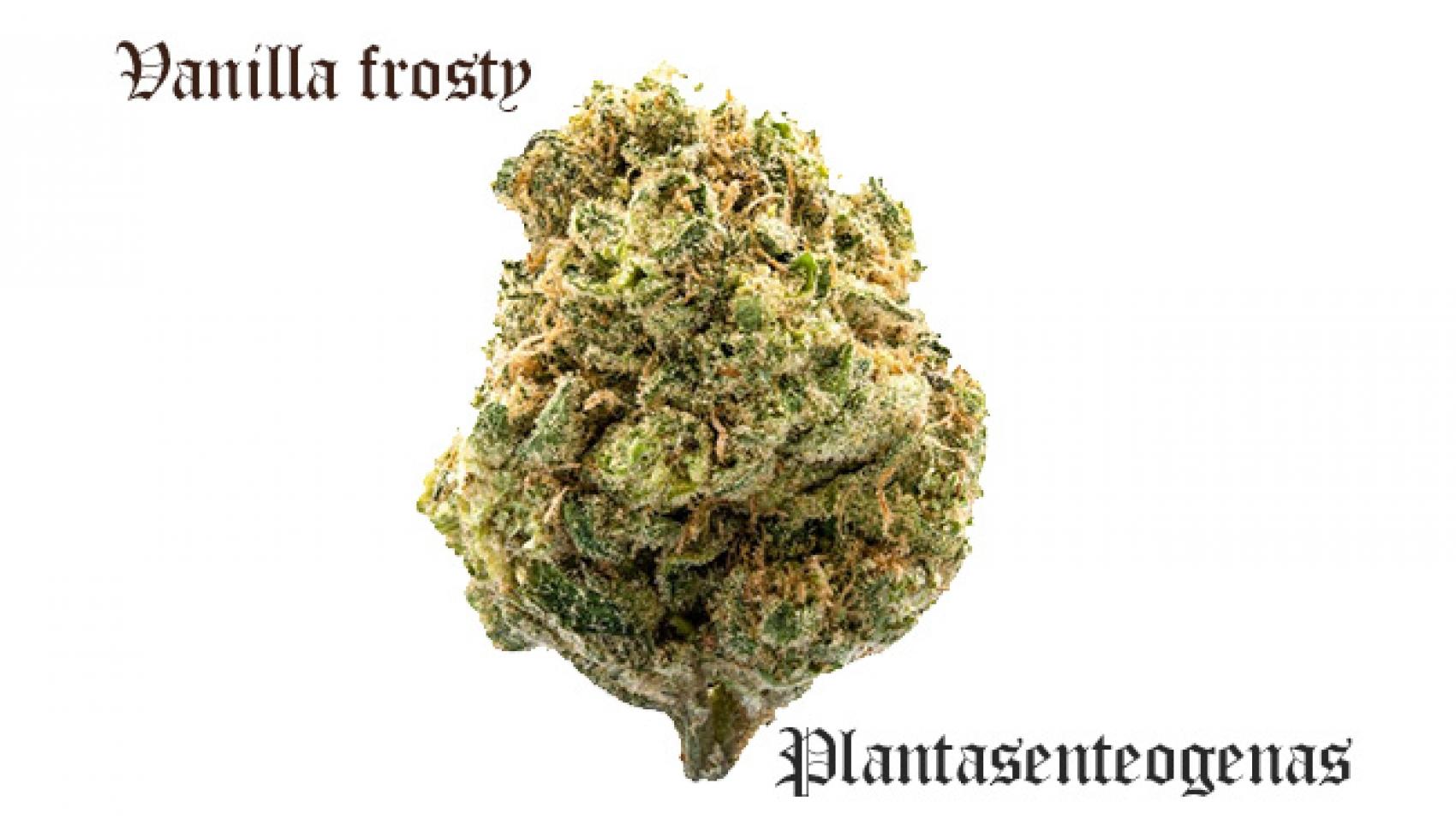 vanilla frosty
