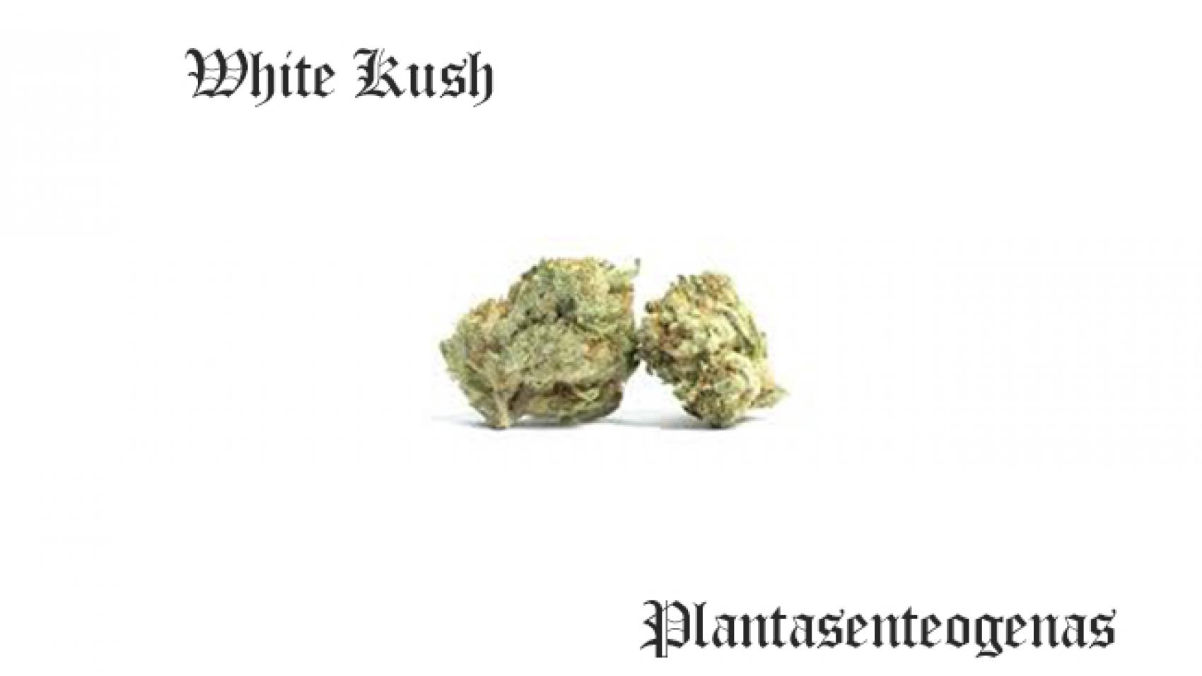 white kush