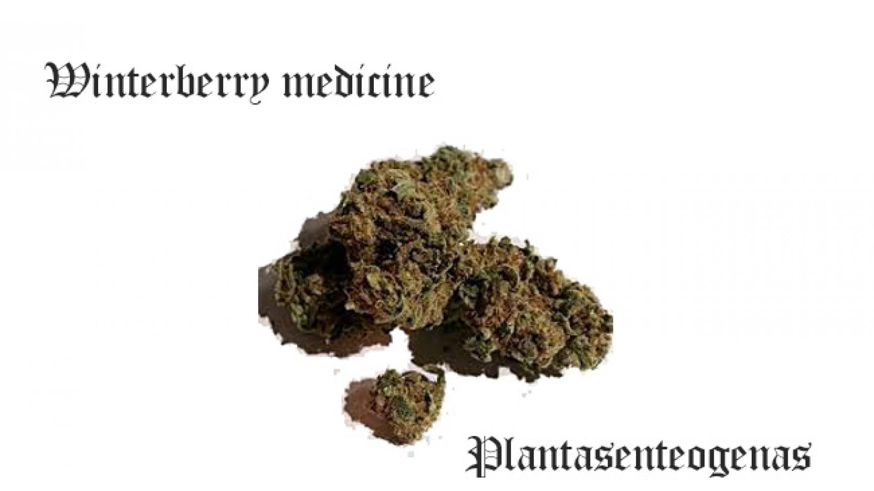 winterberry medicine