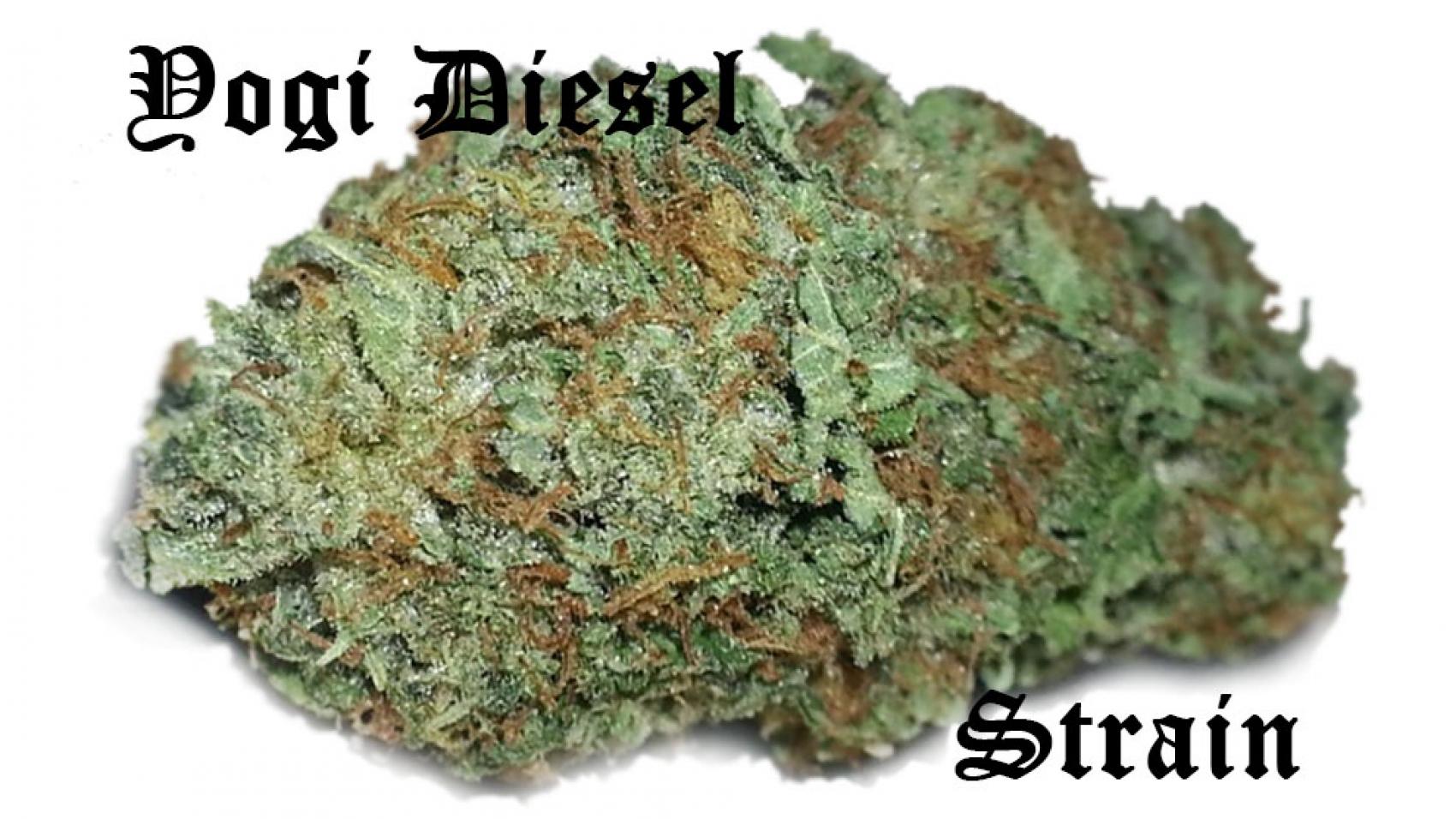 Yogi Diesel