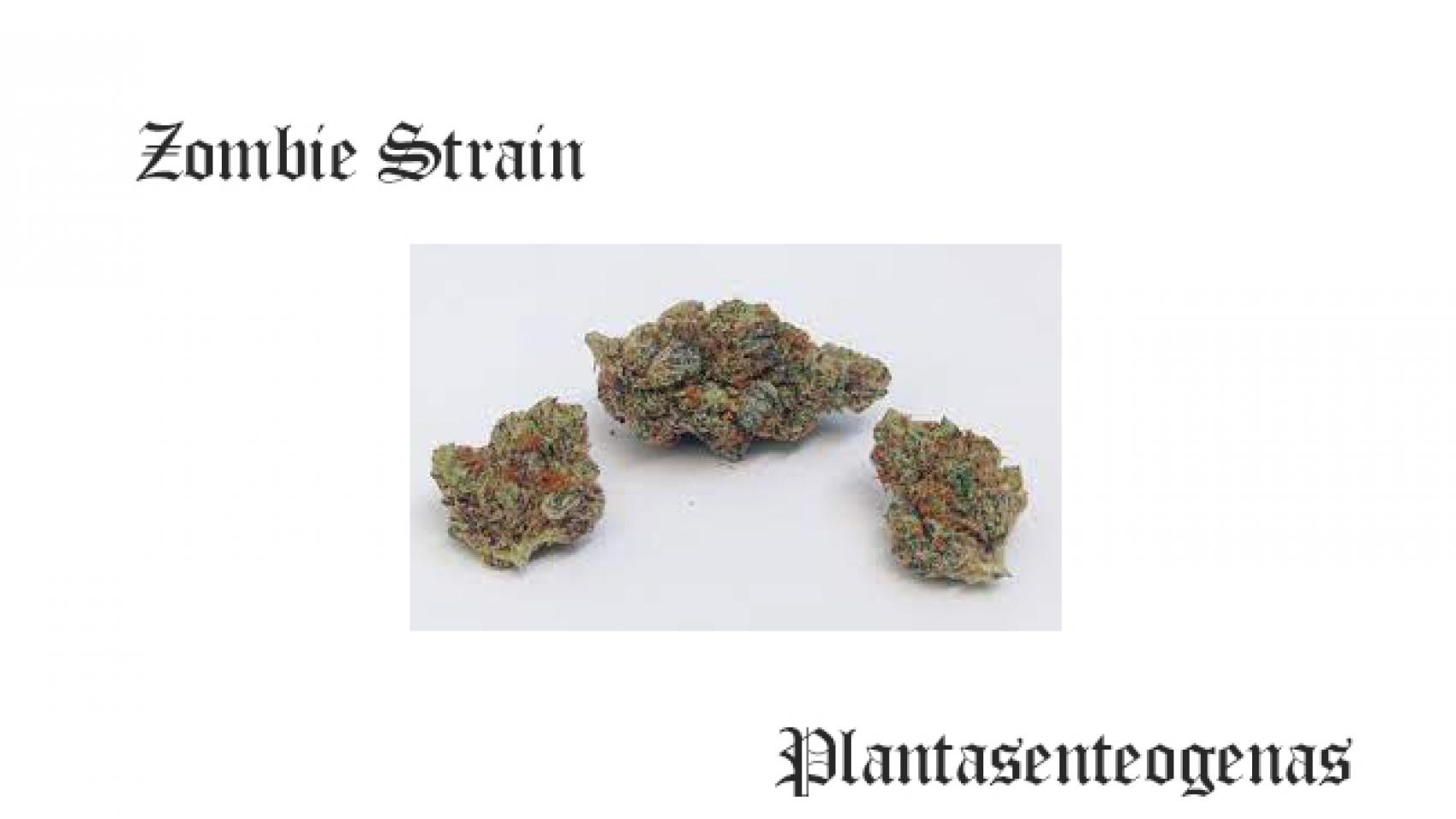 zaza strain