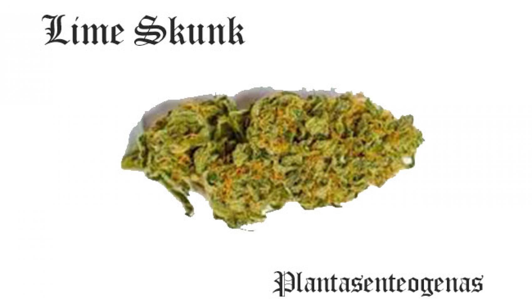 Lime Skunk