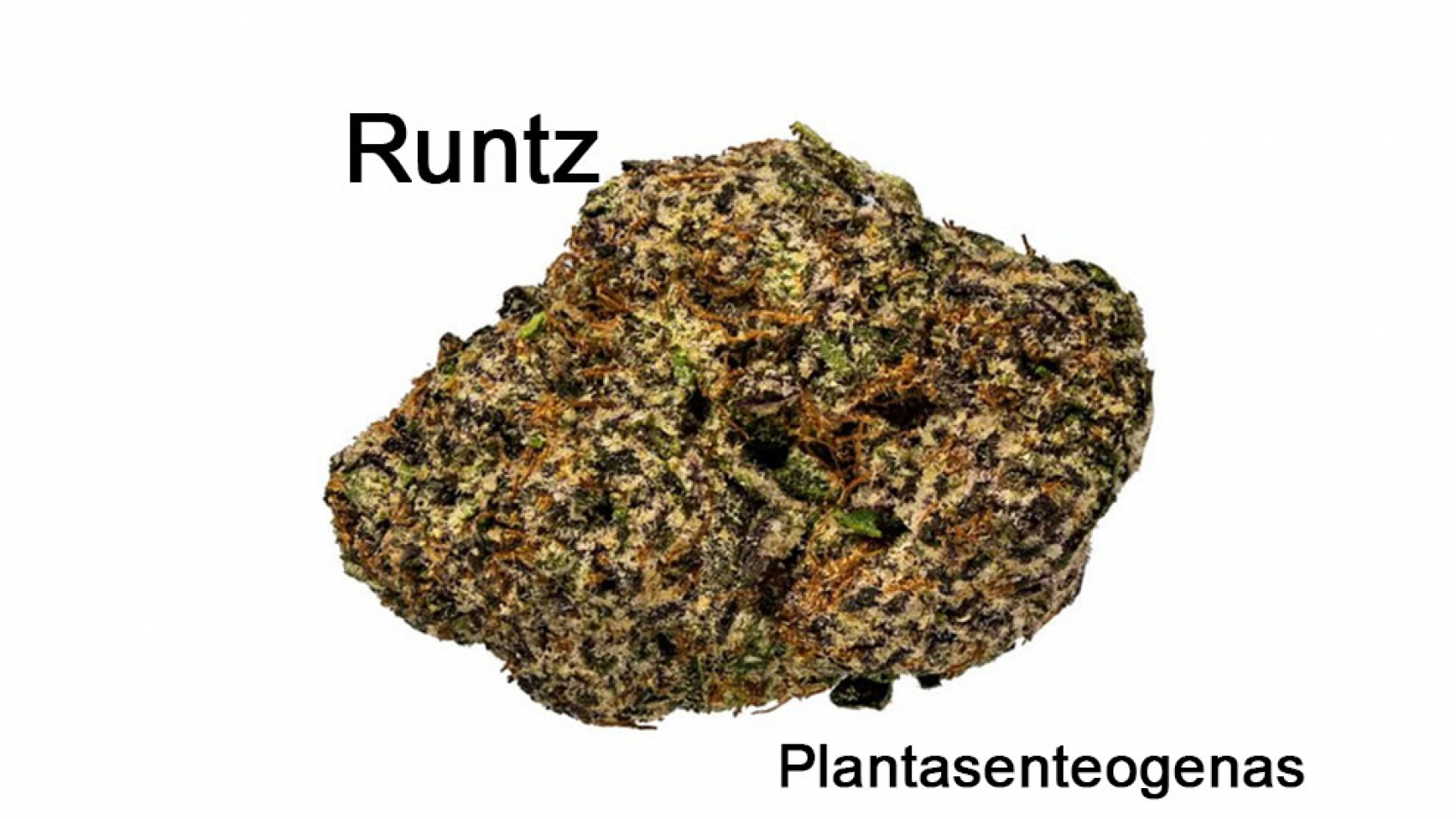 Runtz-02