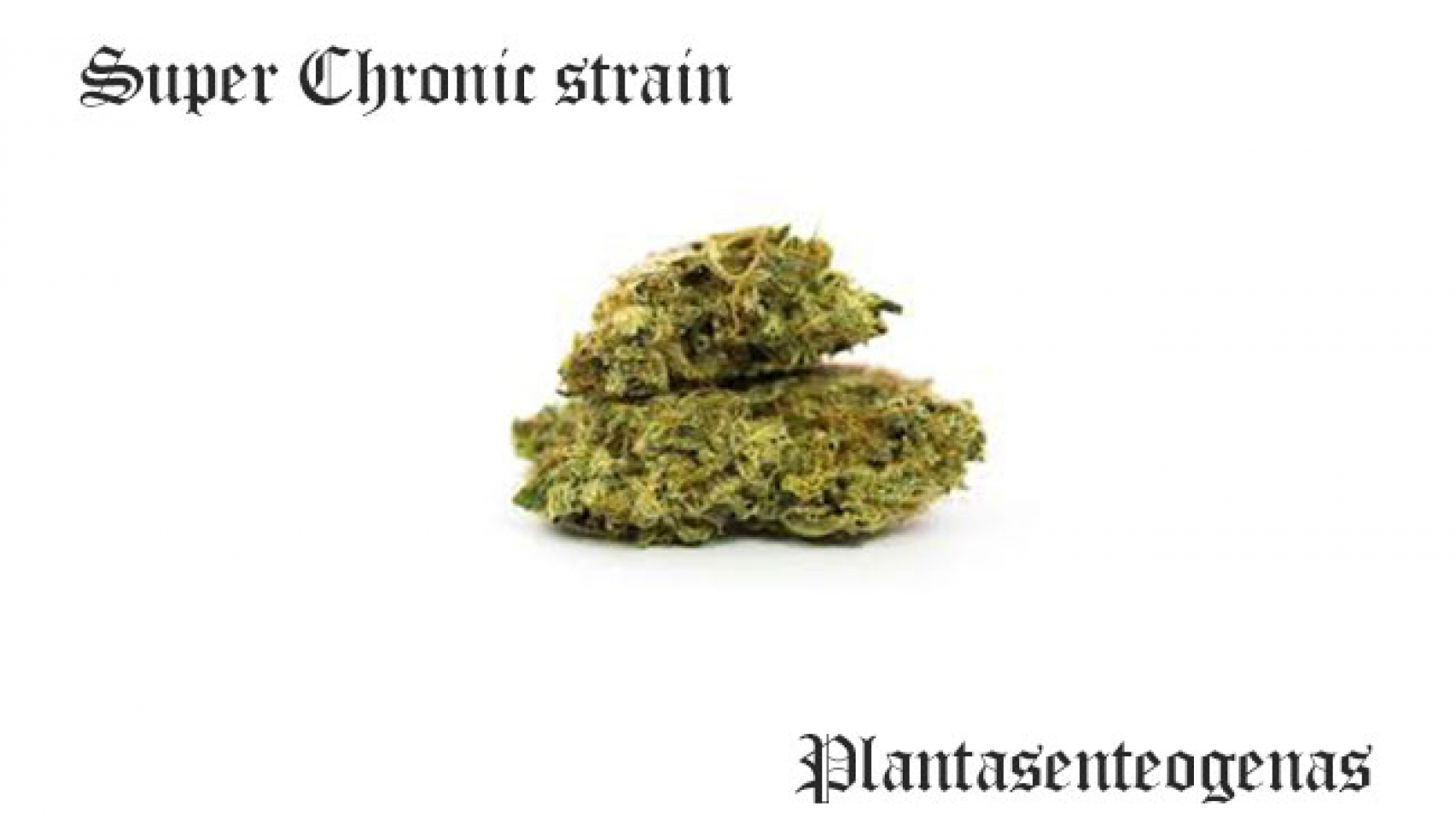Super Chronic strain