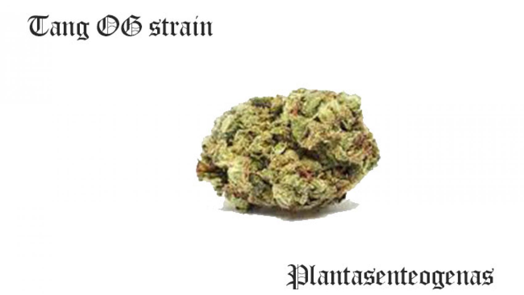 Tang OG strain