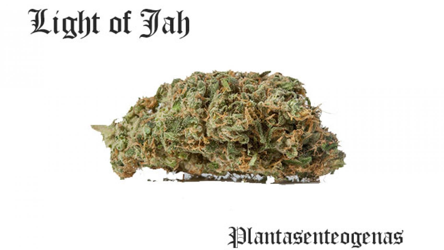 The Light of Jah .