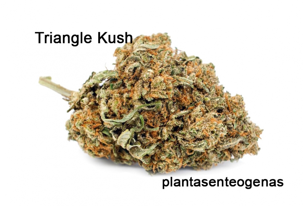 Triangle-Kush-p