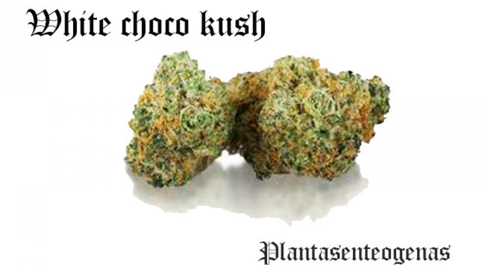 White choco kush
