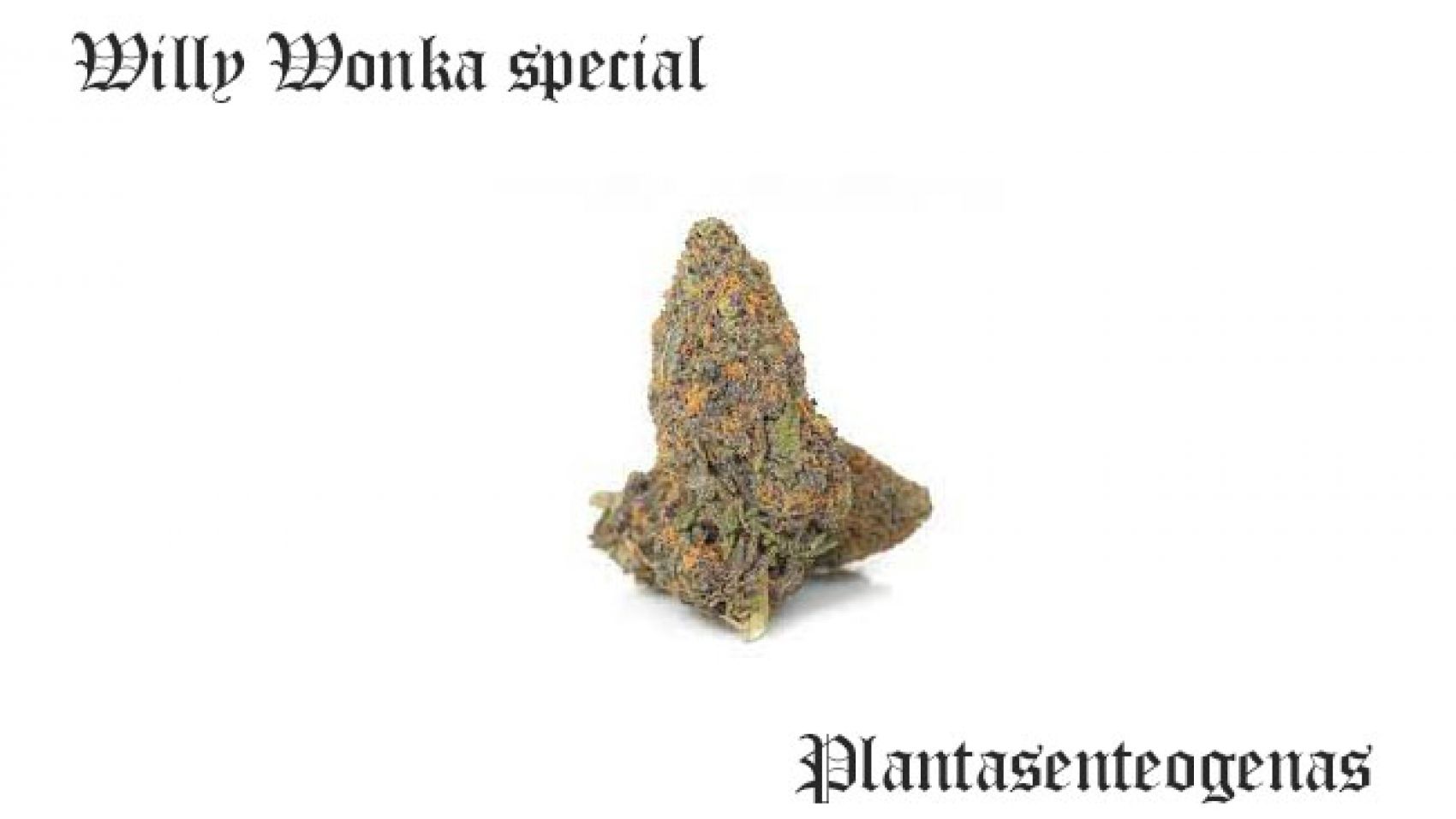 Willy Wonka special