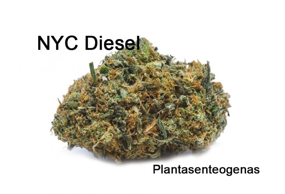 nyc-diesel-strain-02
