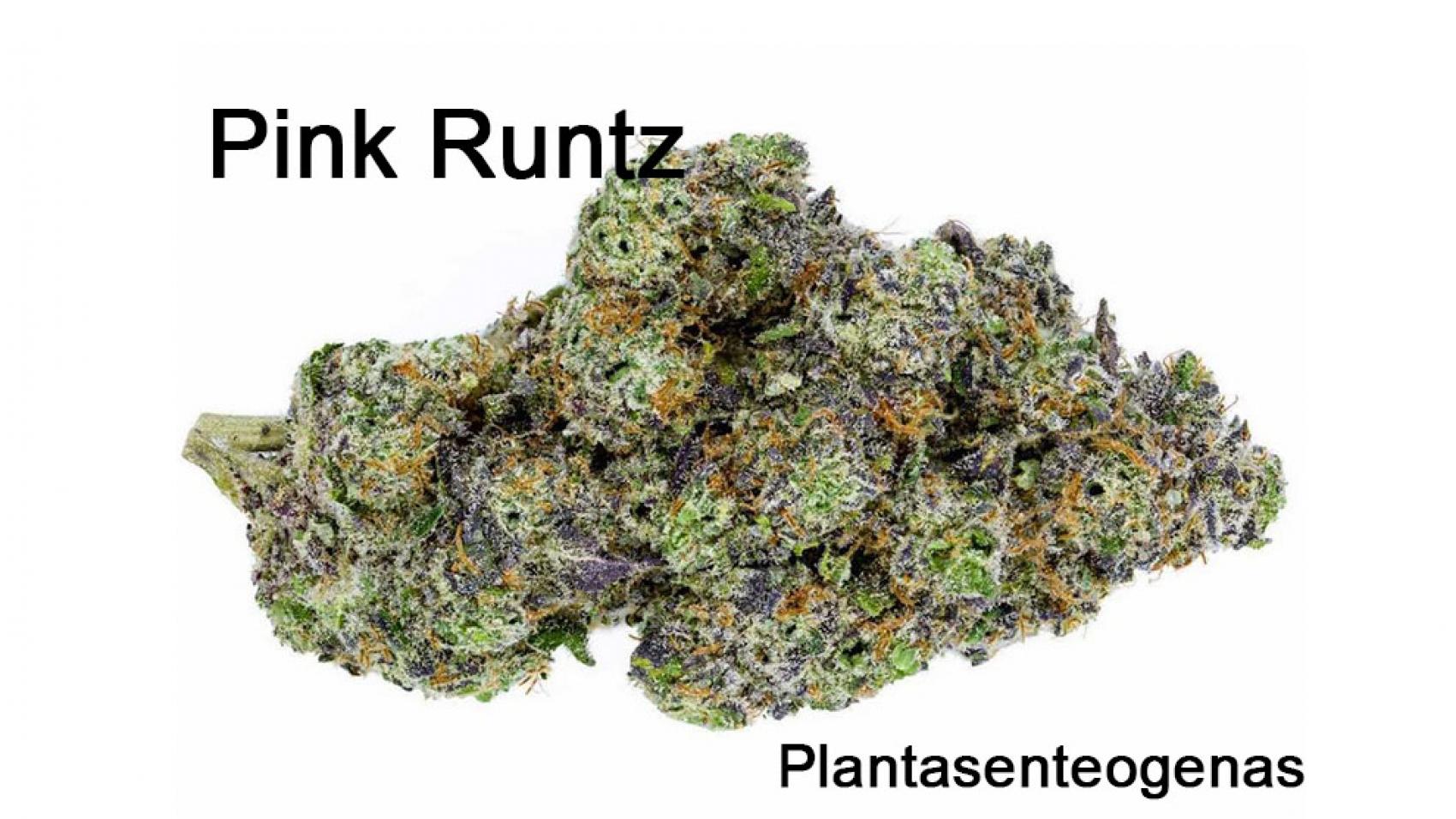 pink-runtz-02