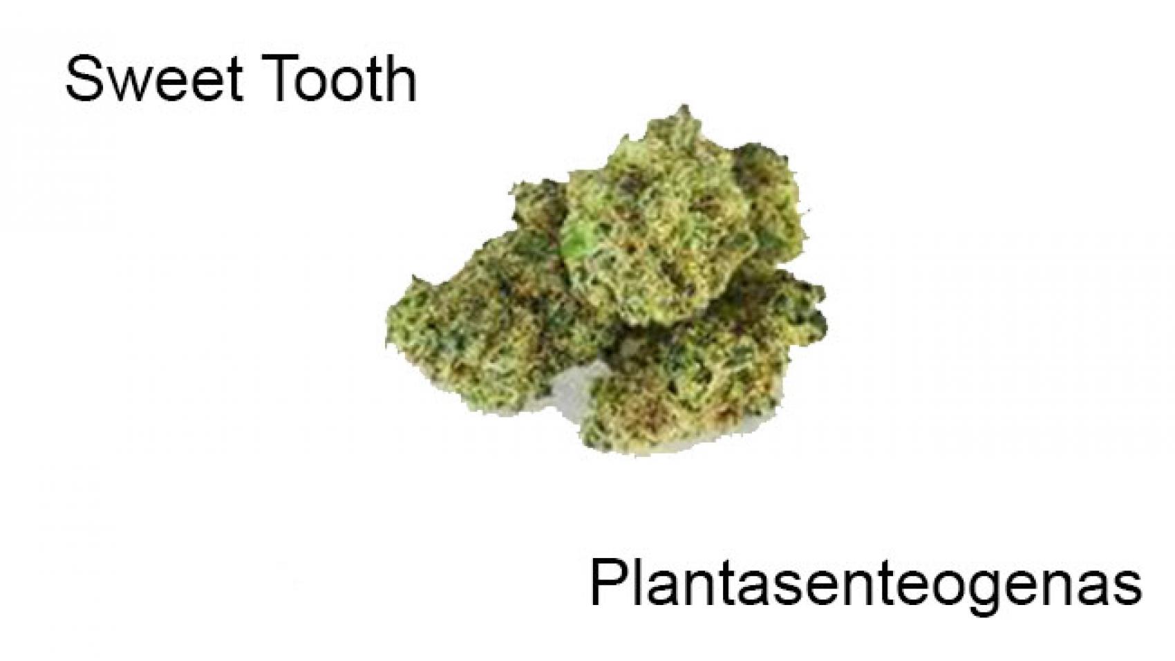 plantasenteogenas