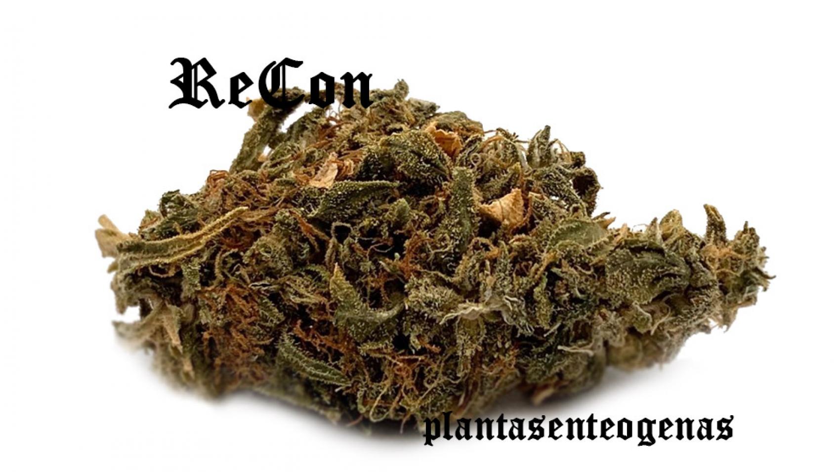 recon-strain-3